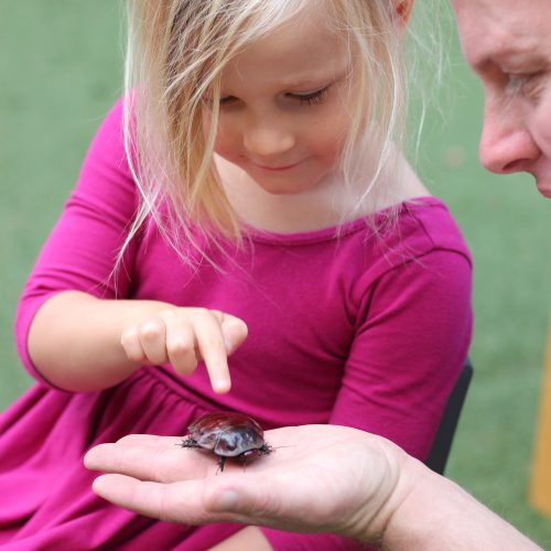 Little girl pointing at bug on man's hand